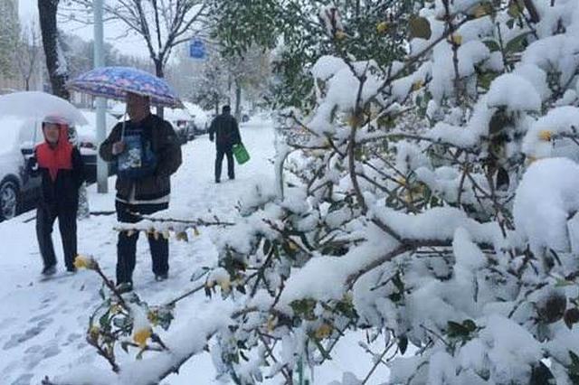 合肥市应急办下发通知 做好冰雪灾害天气应急
