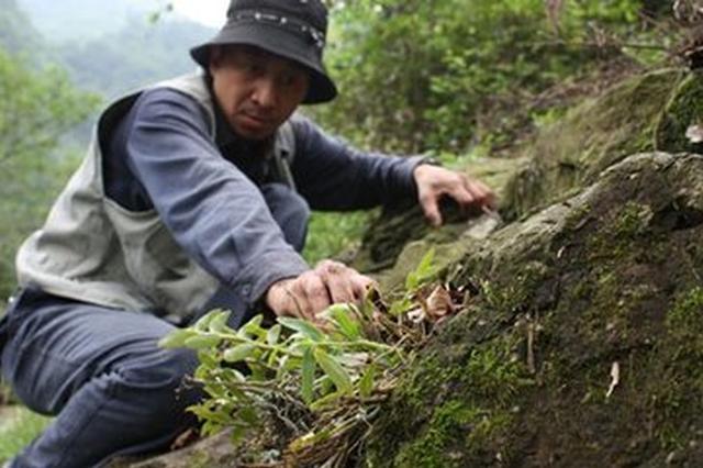 安徽新增13个国家生态原产地保护产品