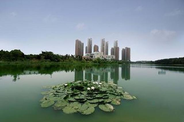 芦苇荡 鱼儿戏 鸟成群 合肥将打造国际湿地城