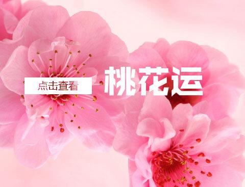 2016桃花运爆棚的生肖女
