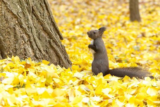 如何对抗秋日悲观综合症