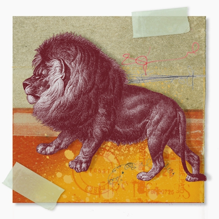 狮子座的眼神是什么样