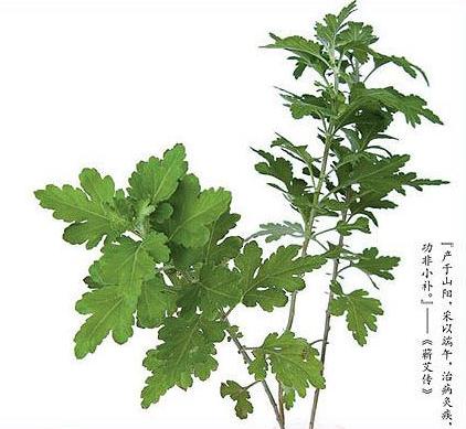 八种可以驱邪的植物(组图)东莞桑拿超爽记
