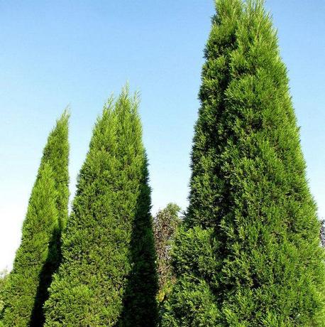 八种可以驱邪的植物(组图)美人三嫁电影