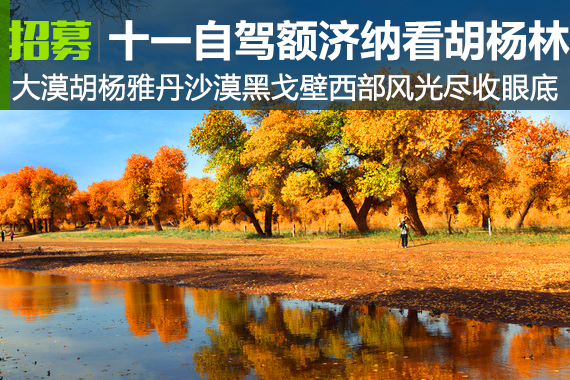 十一去哪?自驾额济纳胡杨林、丝绸之路