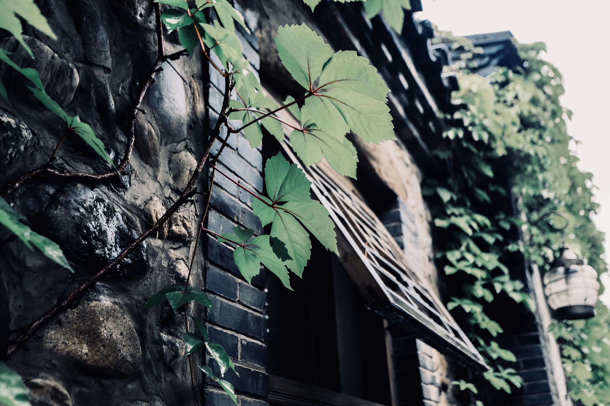 铜绿斑驳的旧窗