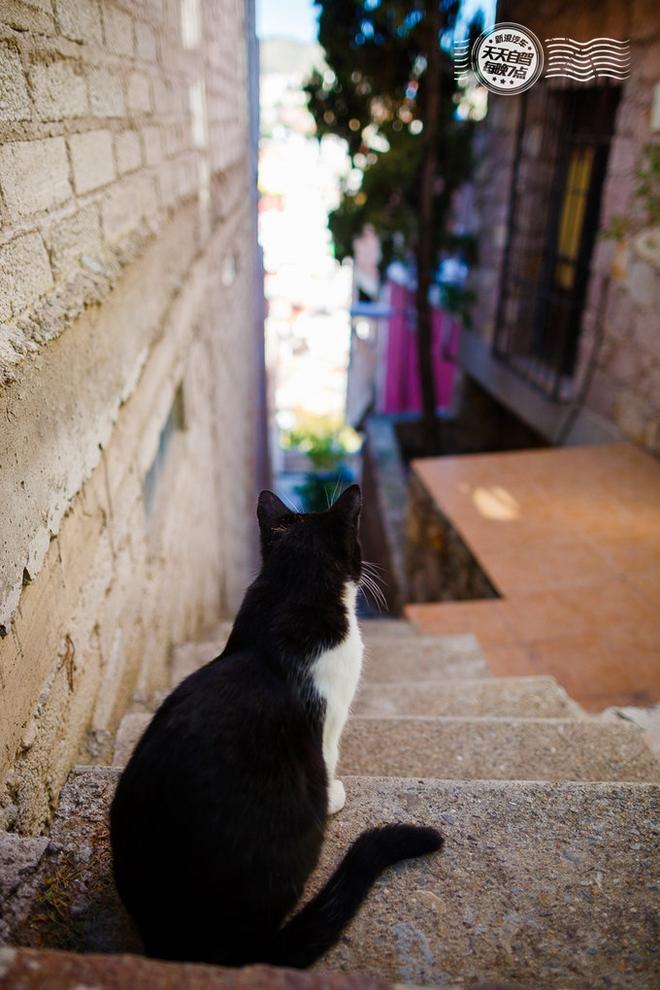 自驾 五光十色墨西哥 捡妹子约基友游金字塔_车猫网