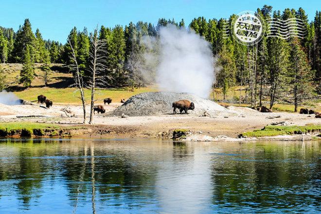 黄石河对岸的牦牛群