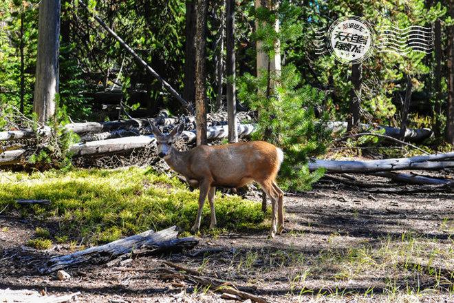 丛林里撞见鹿
