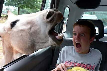 妹子 开车做这事虽然刺激但是很危险啊!