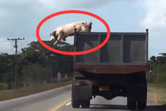 视频:货物自己逃跑了!司机还能交差吗