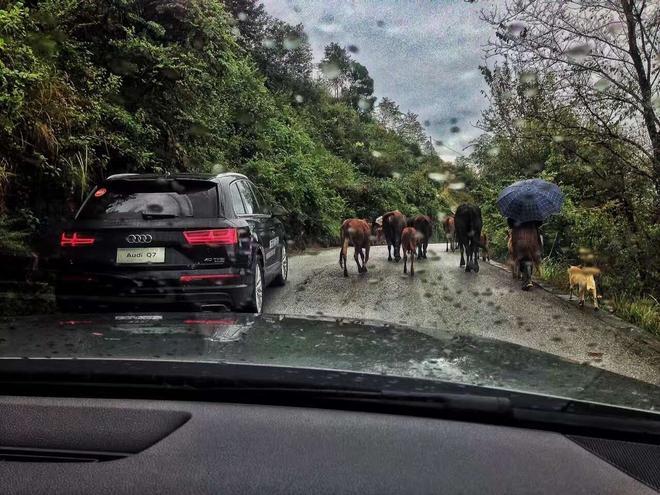 去银杏村的路上遇到羊群