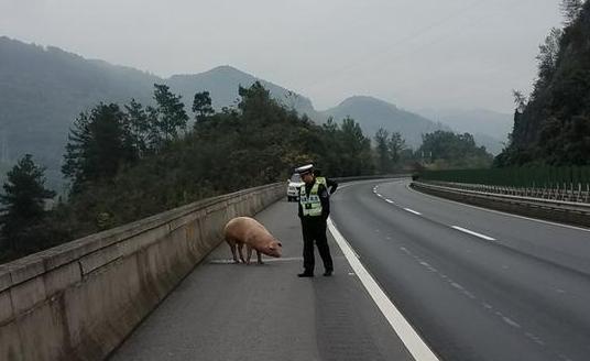 """""""二师兄""""高速公路跳车 驾驶员吃罚单"""
