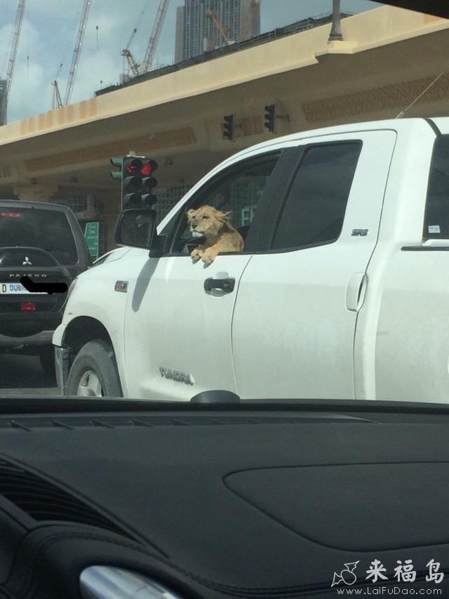 每日趣图|如何做一个娴熟的停车场保安