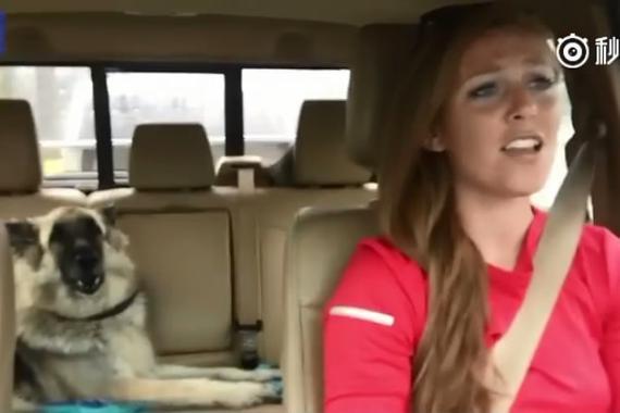 视频:女司机开车唱歌 爱犬竟能配和声