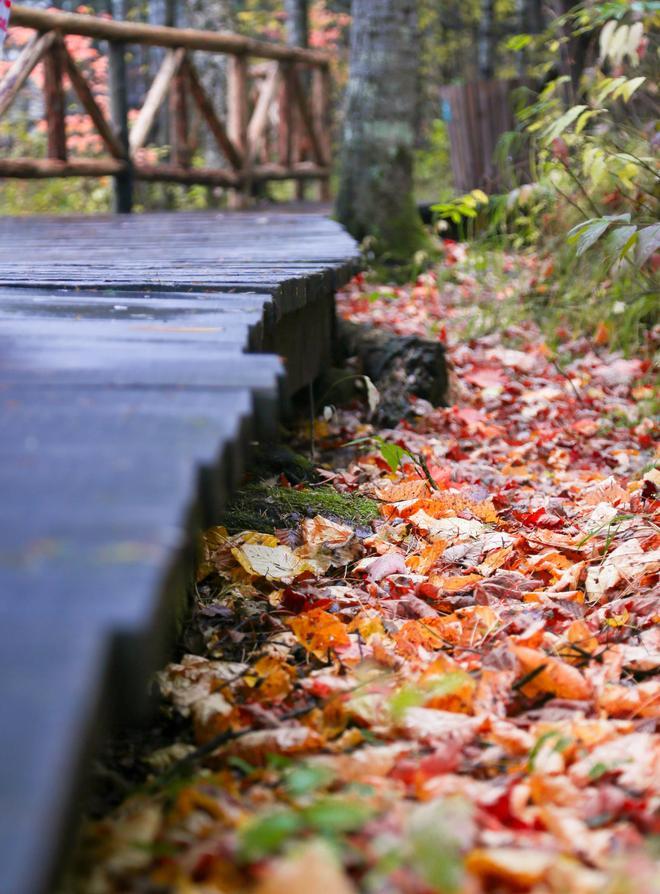 浪漫的秋天 与A5自在漫步