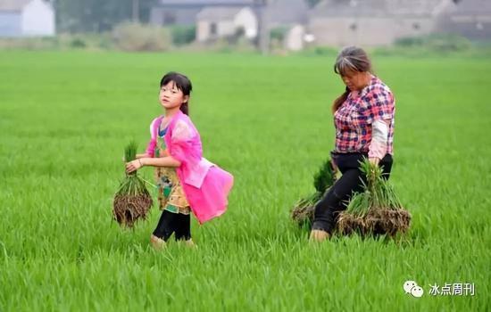 2017年7月15日,南京。10岁的留守儿童?#19978;?#28248;在水稻田里帮助奶奶拔秧苗。平常奶奶一人忙里忙外,她从小就学会了帮助奶奶干农活儿。湘湘希望长大后能当医生,当医生可以帮助病人解除病?#30784;#?#36164;料图片)视觉中国供图