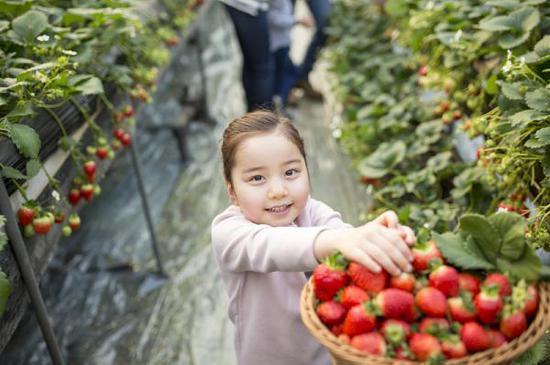 带孩子摘草莓怕不干净 会不会吃进农药?德云相声网