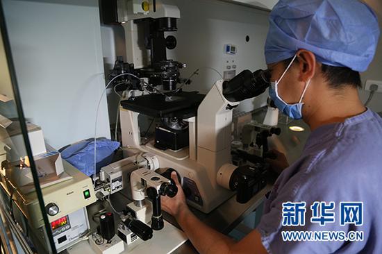 进行卵胞浆内单精子注射操作 新华网 杨锘摄