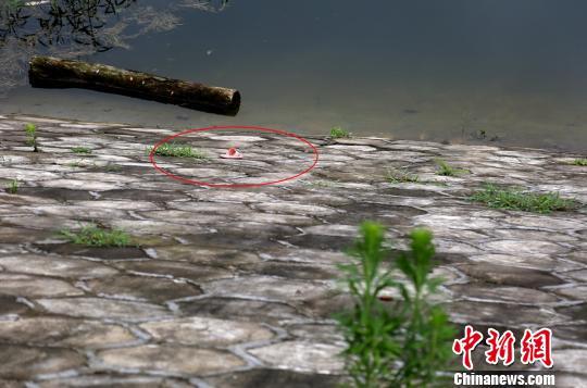 落水处孩子遗落的拖鞋。 钟超 摄