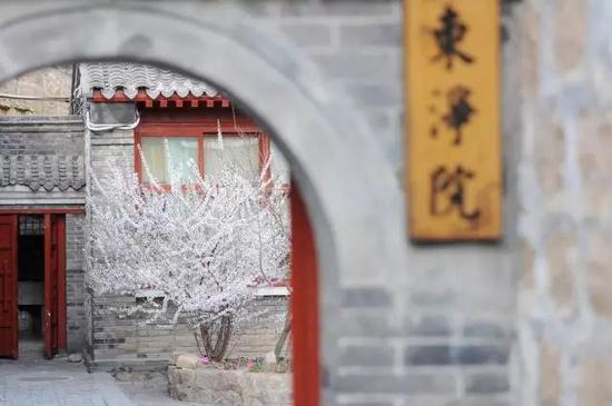 唐林禅风的庭院