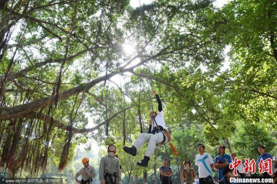 """资料图:厦门大学要开设""""爬树课""""。张向阳 摄 图片来源:CFP视觉中国"""