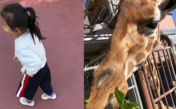 汪小菲携女同游野生动物园