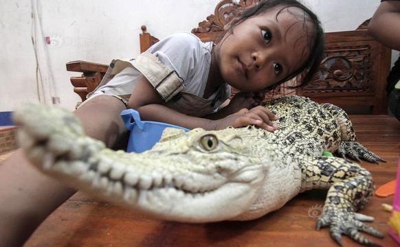 三岁小女孩和鳄鱼成好朋友