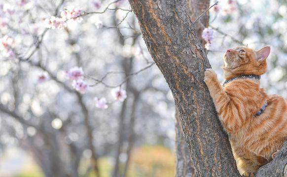 春光正好 赏花才是正经事