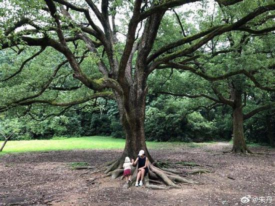 朱丹和女儿在树下