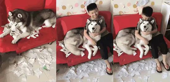 狗狗:这锅我不背!