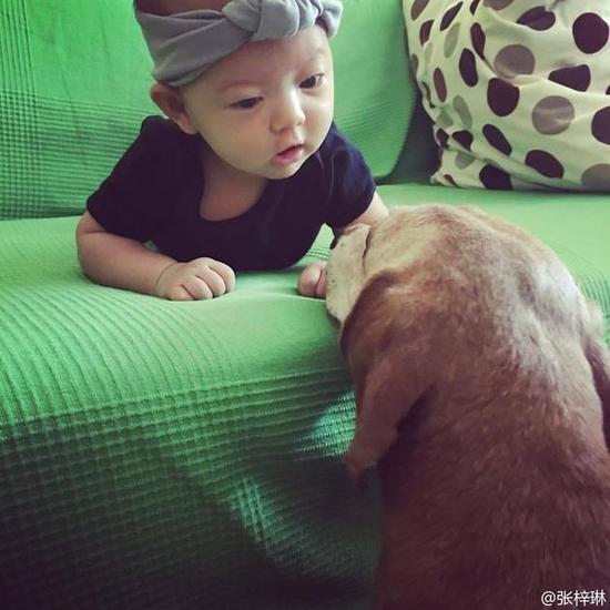 张梓琳晒女儿与萌犬