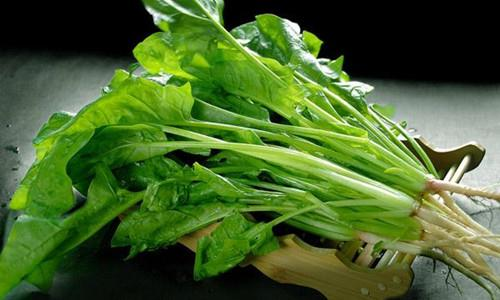 菠菜不宜多吃  夏秋季孩子饮食需注意