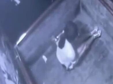 视频显示,张女士在电梯中被一名男子捂嘴扑倒。