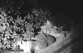 民警发现小女孩时,女孩已在路边睡着。 图/通讯员成世德