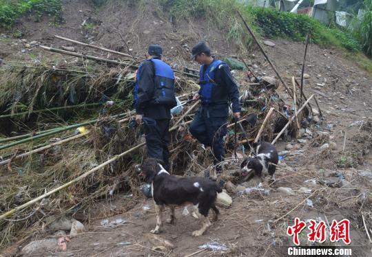 图为公安警犬搜救队搜寻小媛。 文成警方供图