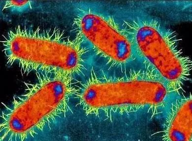 ▲碳青霉烯类抗生素是抗菌活性最强、抗菌谱最广的非典型β-内酰胺抗生素