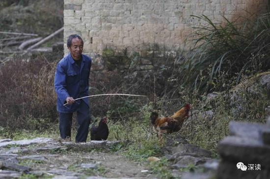 乐建作具有一定劳动能力,每天早上会去老屋喂鸡放鸡,傍晚再将鸡赶回笼子
