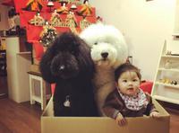 日本萌娃与狗狗暖照走红网络
