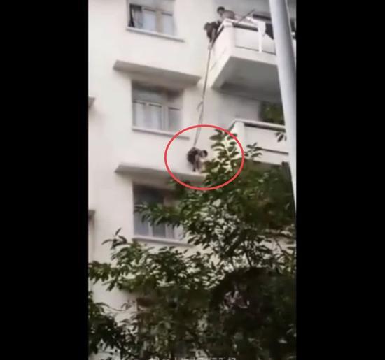 视频中,男童被绳子绑着站在四楼阳台边角,抓住猫后放入袋中。