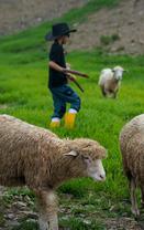 刘若英带儿子体验牧羊生活