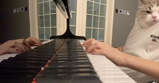 天天抱猫弹钢琴