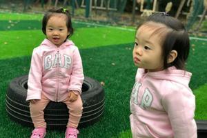 杨云晒双胞胎女儿萌照 网友:基因强大超像爸爸