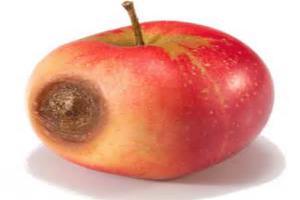 """警惕家庭教育中的""""坏苹果效应"""""""