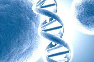 产前无创基因检测错杀1.5万胎儿? 华大基因回应