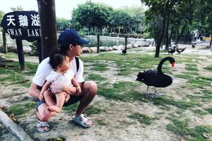 江宏杰抱女儿超近看天鹅 爱酱小脚踩爸爸腿很紧张