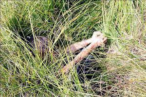 美国一男童被困森林 无水无食物熬过3天终获救