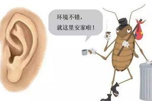 怎样知道宝宝耳道内有异物进入了?