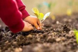 """瑞士让儿童""""种""""内裤 认识土壤多样性"""