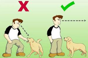 孩子与狗,多学一些,备不时之需